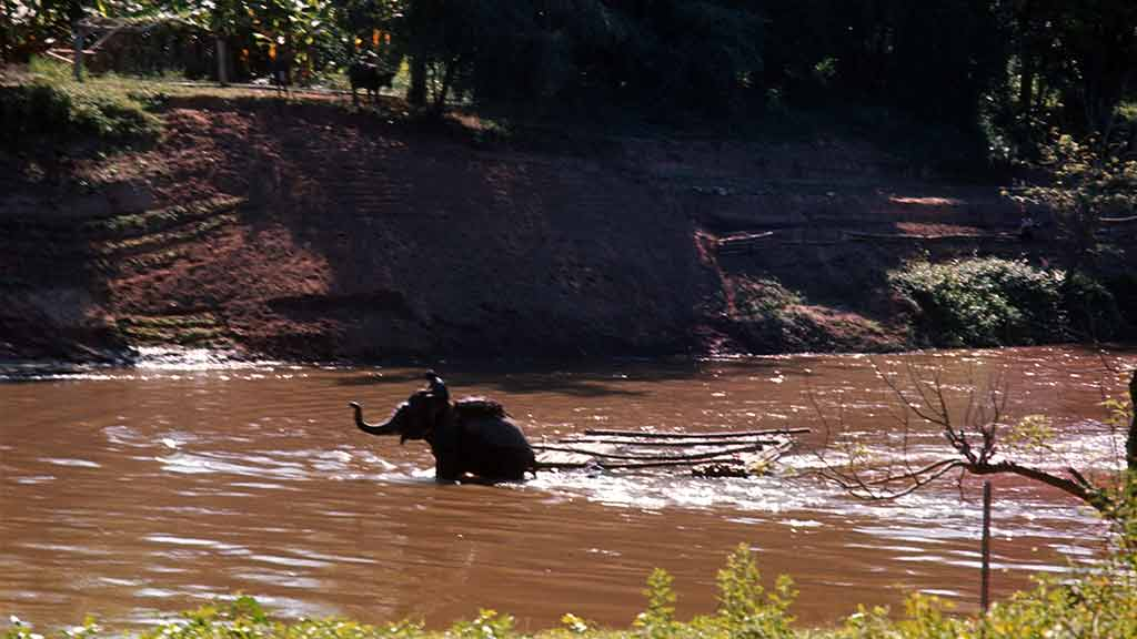 An elephant wades through a river pulling a sled of timber
