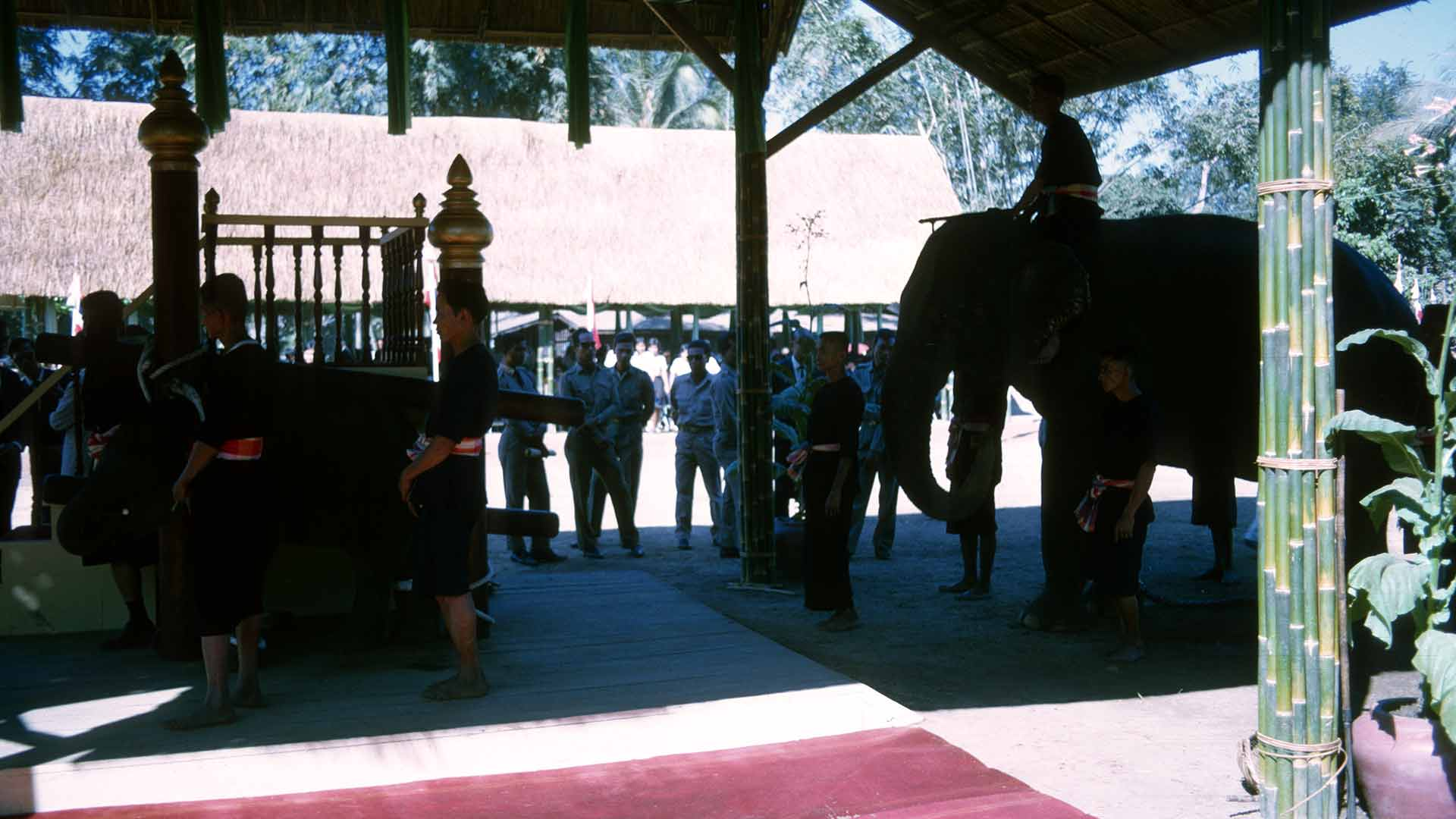 The elephant approaches the special stand built under the open-air structure