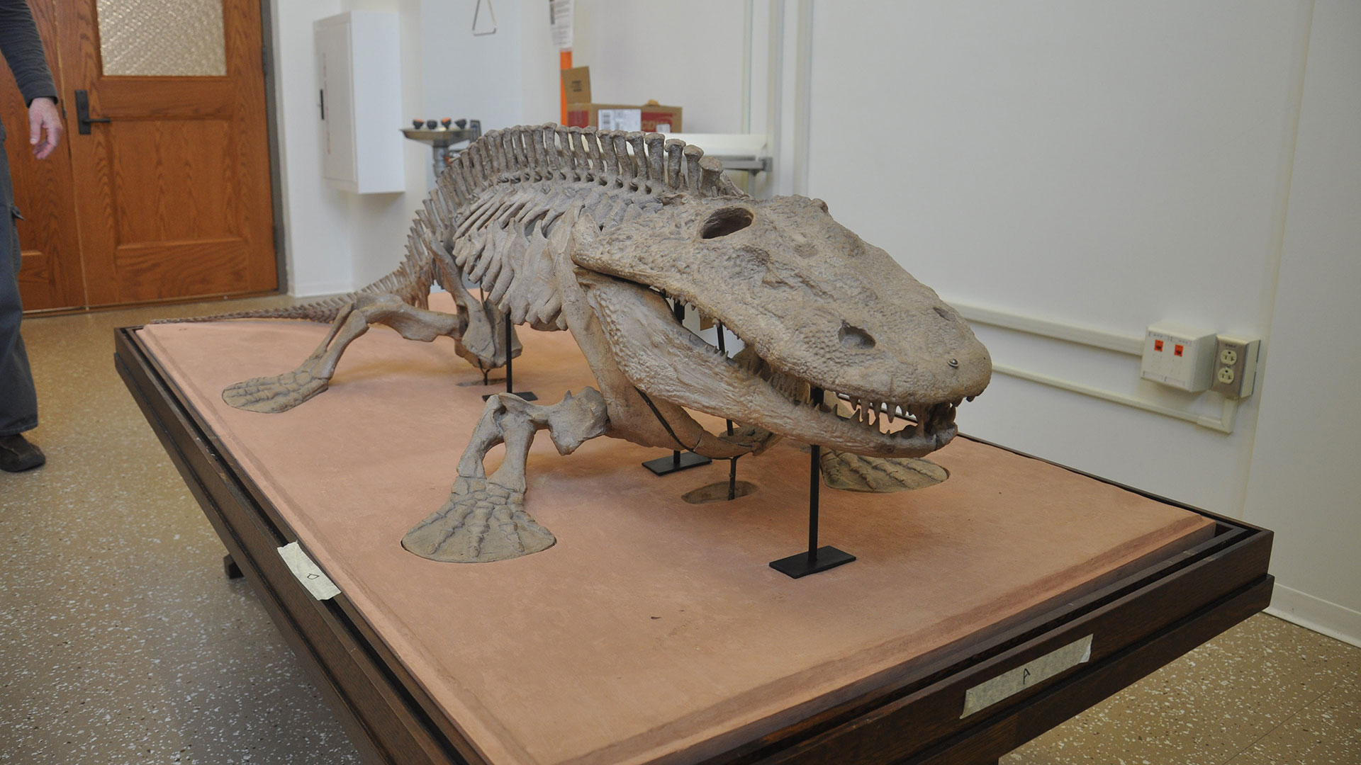 6-8 feet long prehistoric reptile-looking plaster cast mounted to a stand