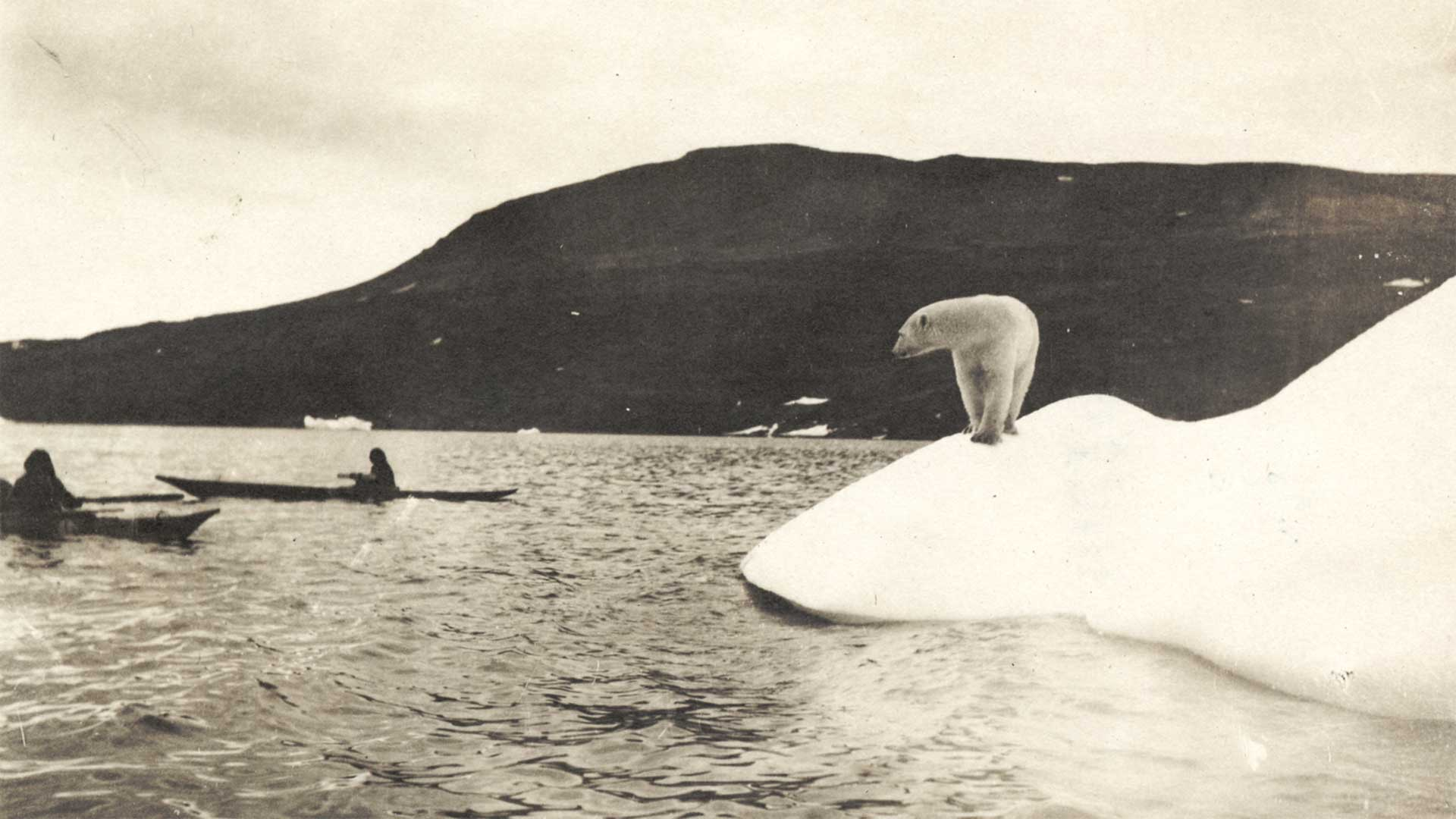 vintage photo of polar bear watching people in canoes