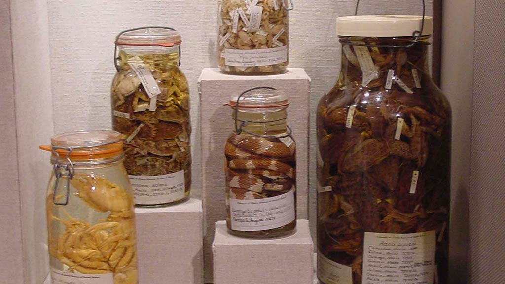 diffrent animals like snakes being put in jars